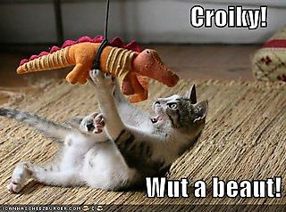 Funny-pictures-kitten-has-a-beautiful-crocodile