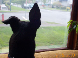 Sarah the Neighbourhood Watch Dog